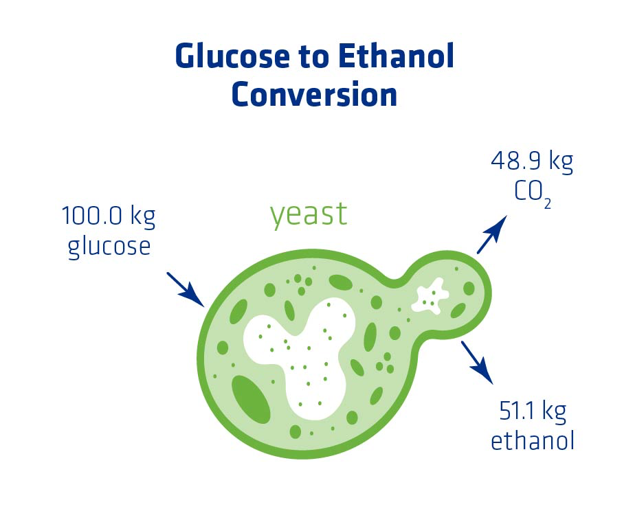 Figure 1. Glucose to Ethanol Conversion
