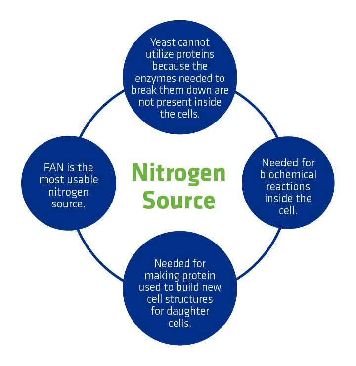 Figure 3. Reasons why nitrogen is critical for yeast functioning.