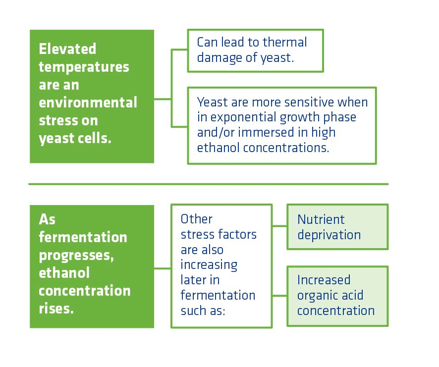 Figure 7. Most notable impact of temperature on yeast.