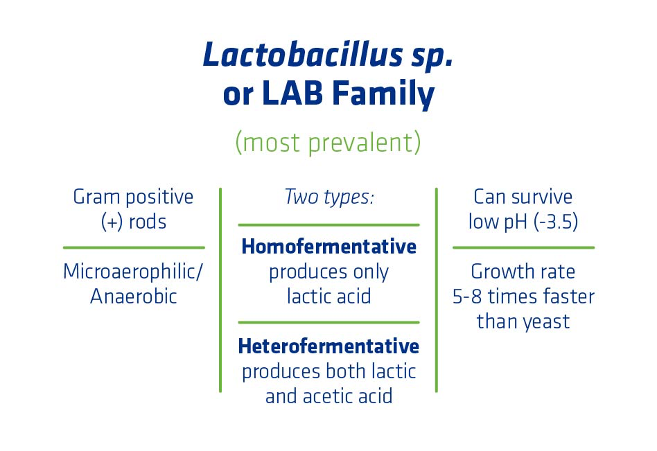Figure 3. Characteristics of the Lactic Acid Bacteria (LAB) family of organisms.